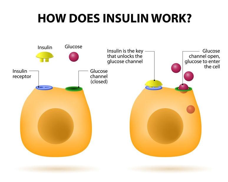 Na koji način radi inzulin