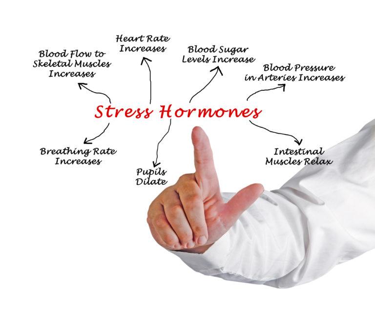 Utjecaj hormona stresa na organizam