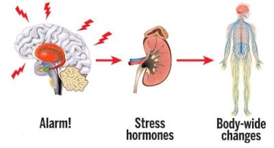 Izloženost stresu i hormoni