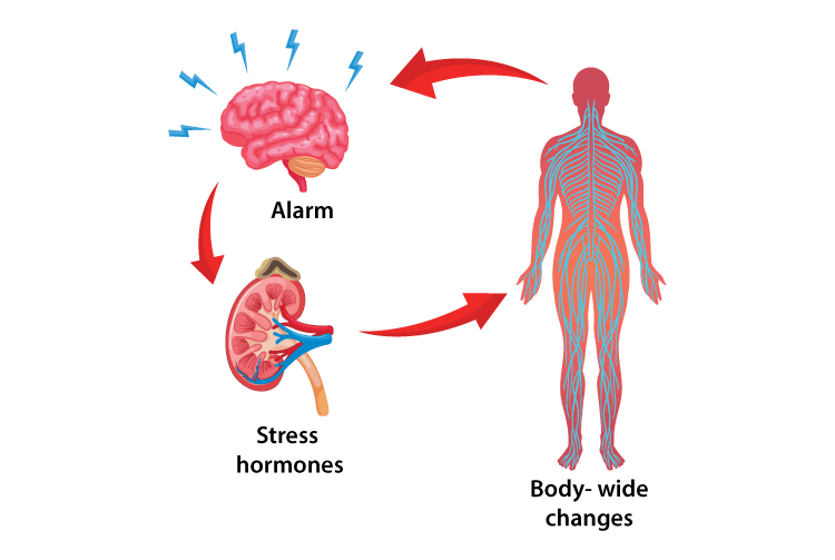 Povezanost hormona i stresa